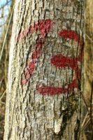 Czerwony napis trzynaście na drzewie